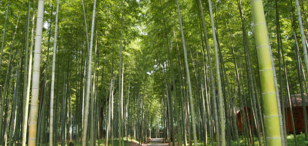 Bamboo is one of most eco-friendly material in the world.
